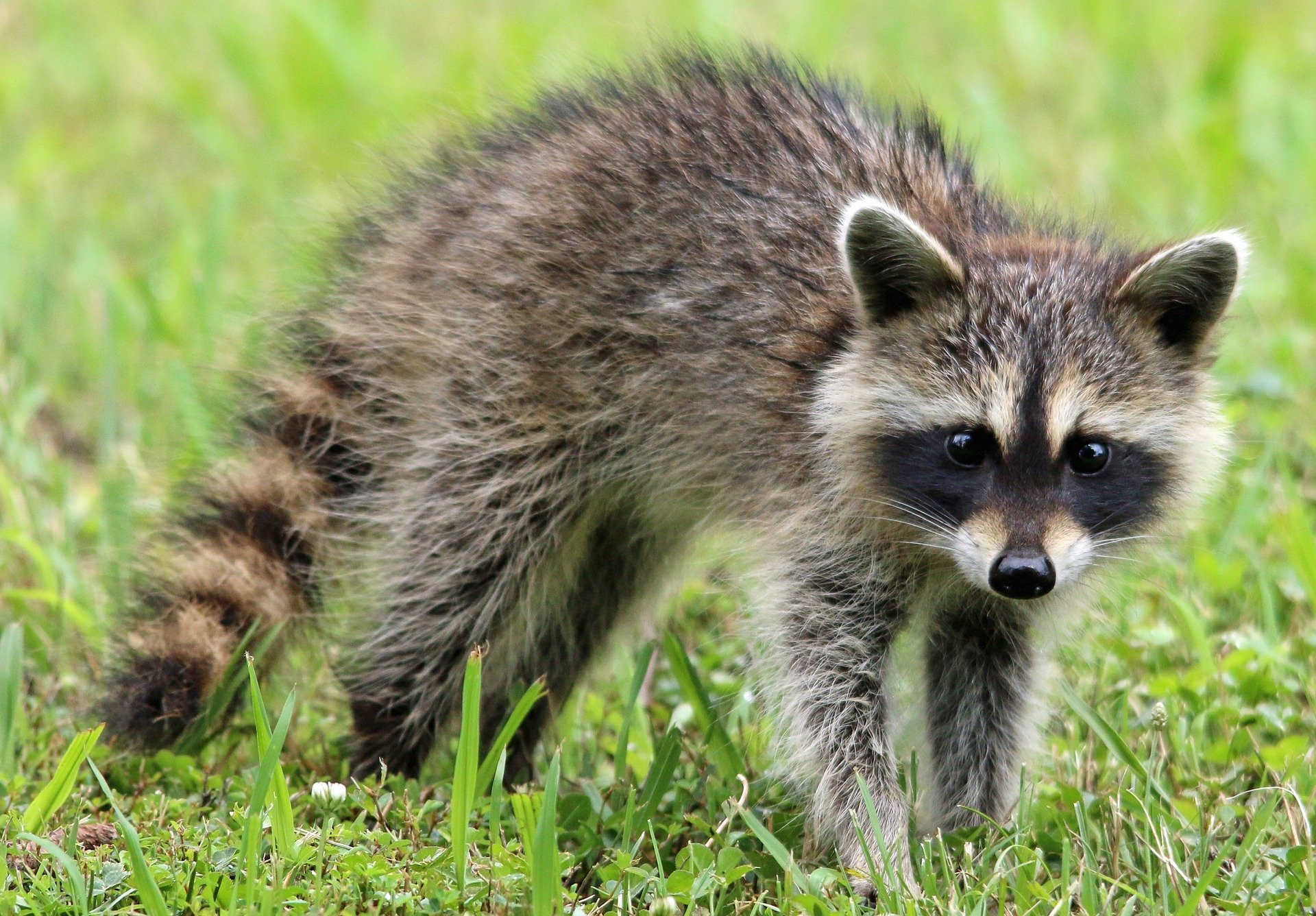 Tips On Hiring a Wildlife Removal Service Company - Heritage Wildlife Management